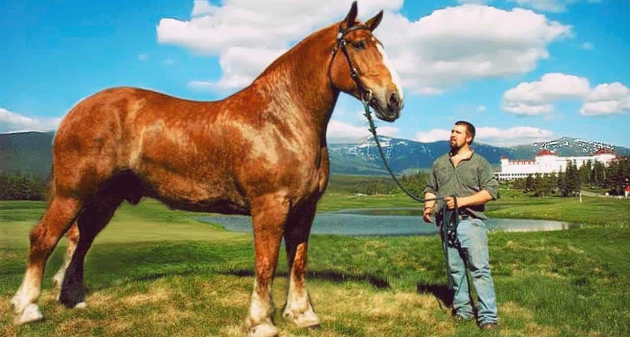 Big Jake Pferd